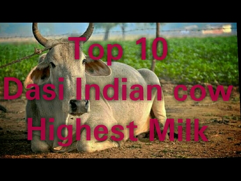 Top 10 Indian cow breeds for milk || gir cow information|| indian dairy farming in hindi